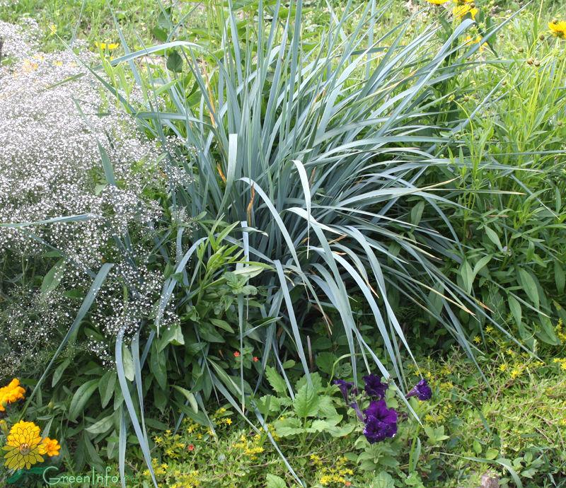 Домашние цветы и растения фото виды названия