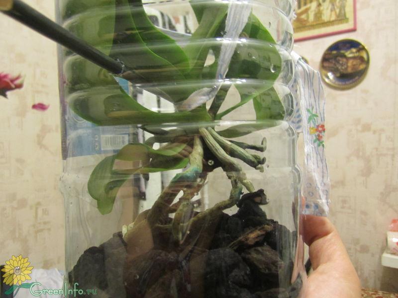Как сделать тепличку для орхидеей