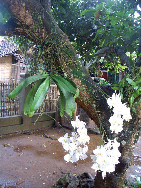 Re орхидеи в природе