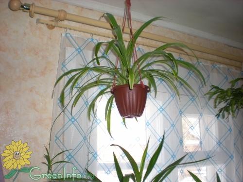чем подкармливать комнатные растения осенью