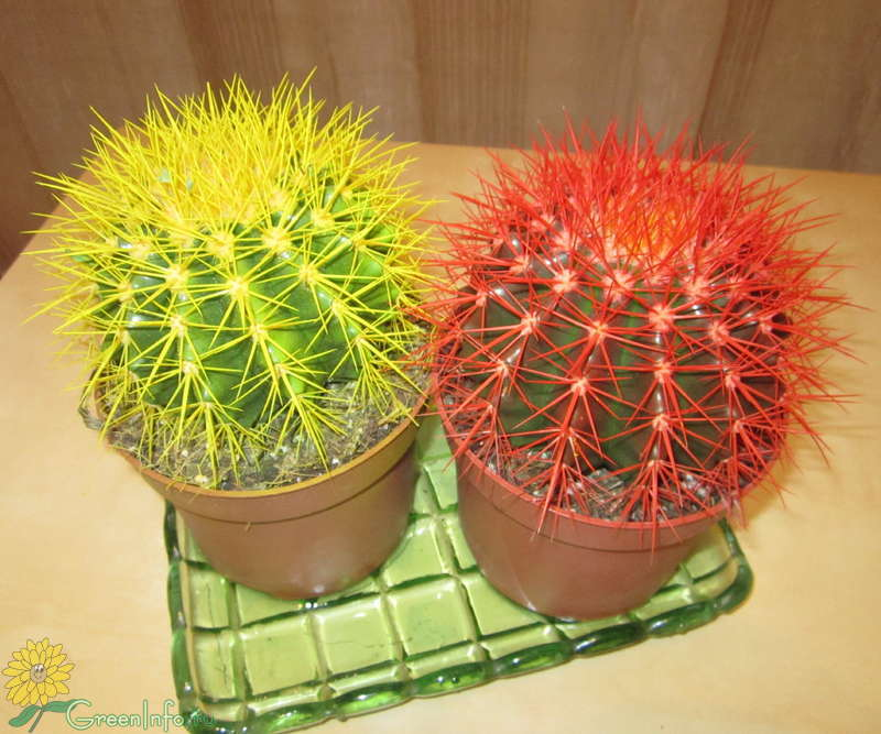 Все разновидности кактусов уход