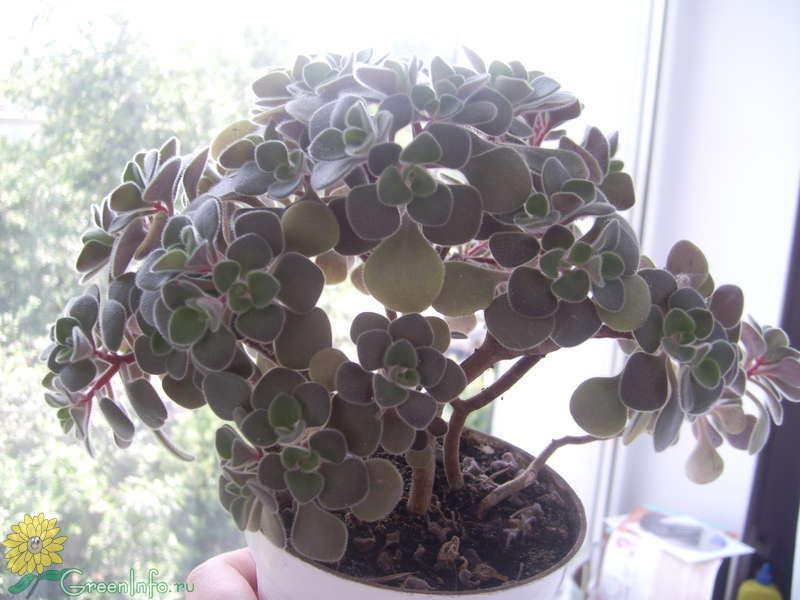 Нецветущие комнатные растения фото