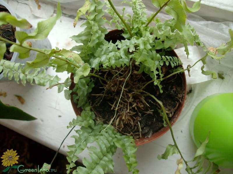 Почему комнатные растения плохо растут