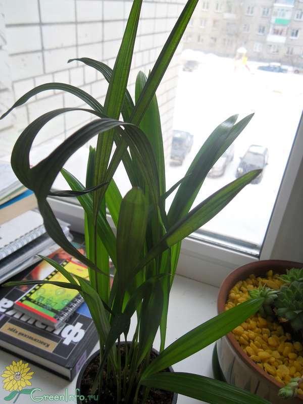 азот как удобрение для комнатных растений