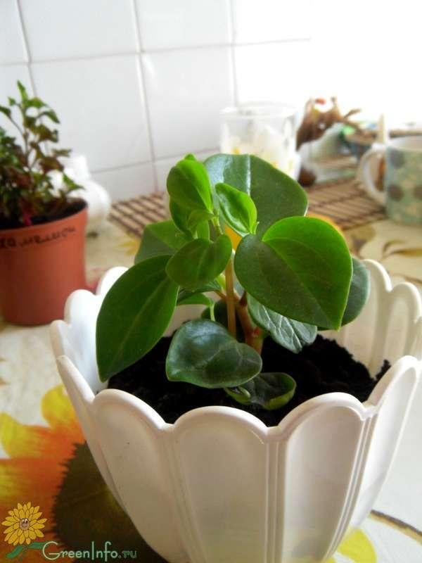 Комнатные бромелиевые растения и их фото