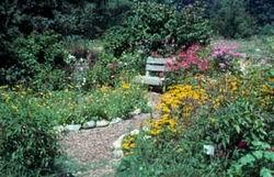Как правильно сделать садовые дорожки...  Основные правила