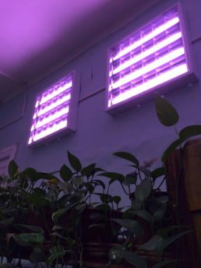 какие днат лампы подходят для растений