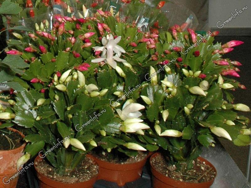 Растения форум