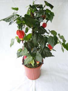 Растения начинающиеся на букву А список с названиями