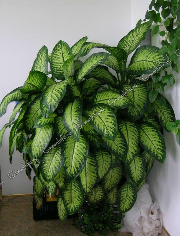 Вредители комнатных растений : фото, причины и меры борьбы