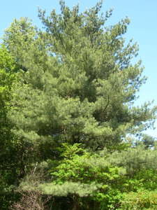 Декоративные деревья и кустарники.