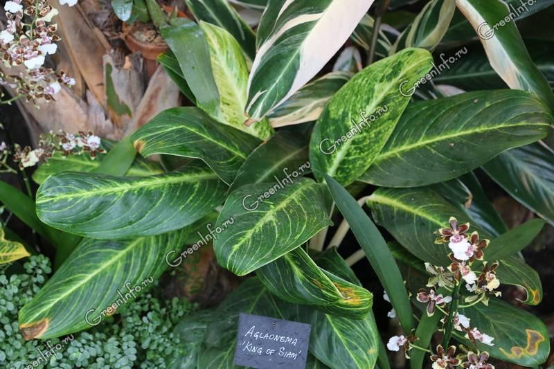 Полный список растений на сайте