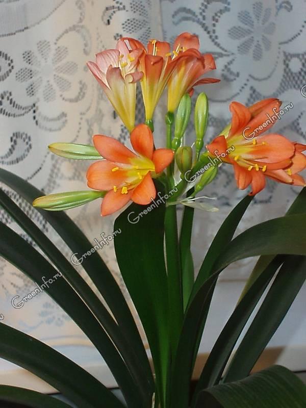 адовые цветы с мясистыми листьями 600 x 800 · jpeg
