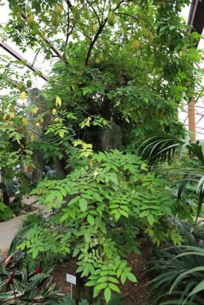 Картинки комнатных растений с названиями и описаниями 14