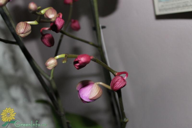 Орхидеи почему вянут цветы
