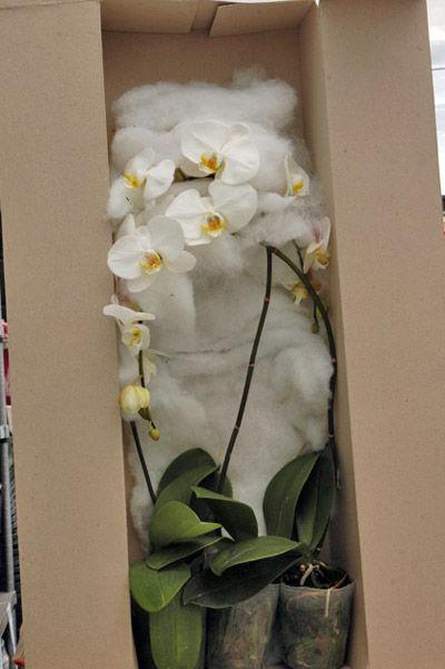 Можно ли перевозить цветы в горшках в самолете