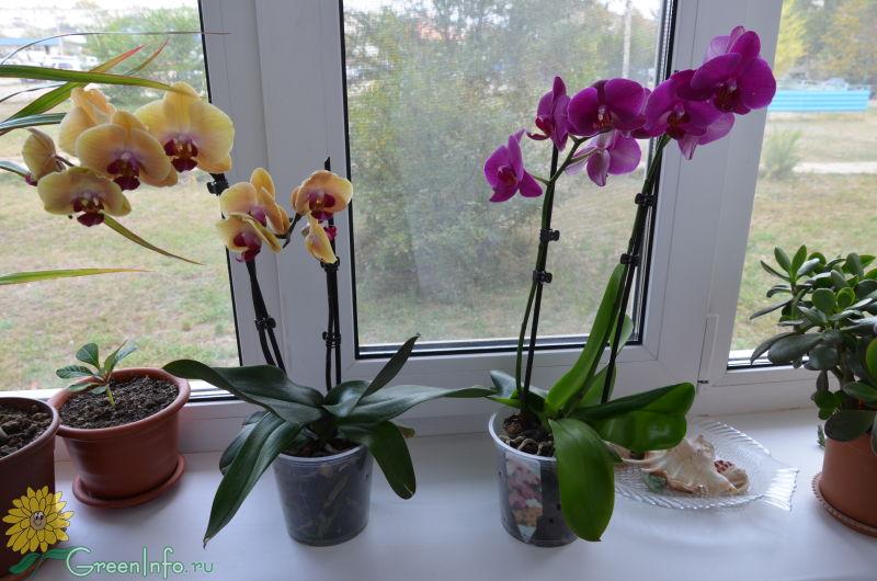 академия Министерства почему вянет орхидея что делать решение суда