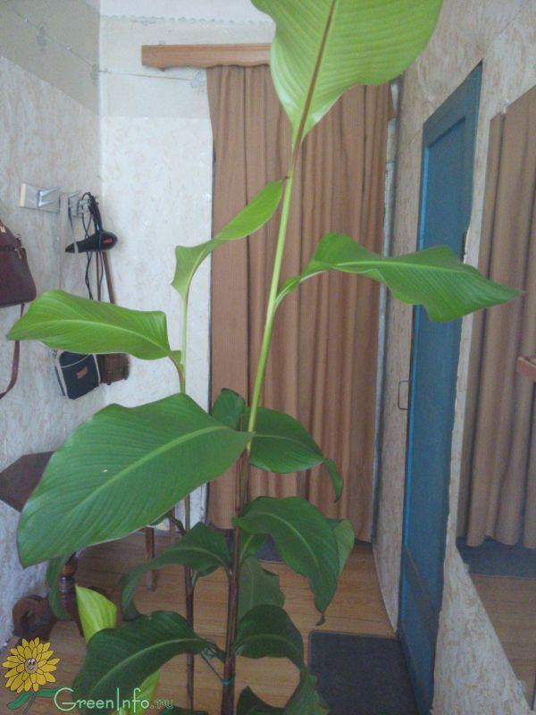 Определение растений по фотографии