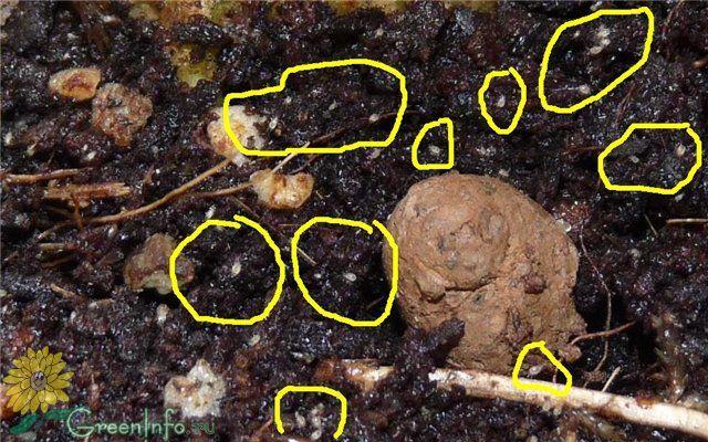 стирают термобелье, в грунте с рассадой червячки этом полиэстер
