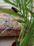 нужны сохнет хризолидо карпус пальма отрицательные значения