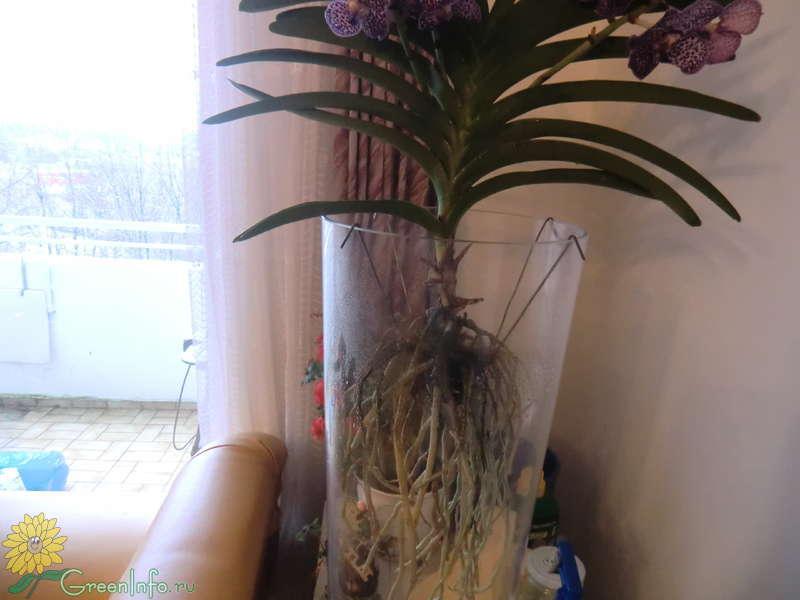 Детки орхидеи что делать 8