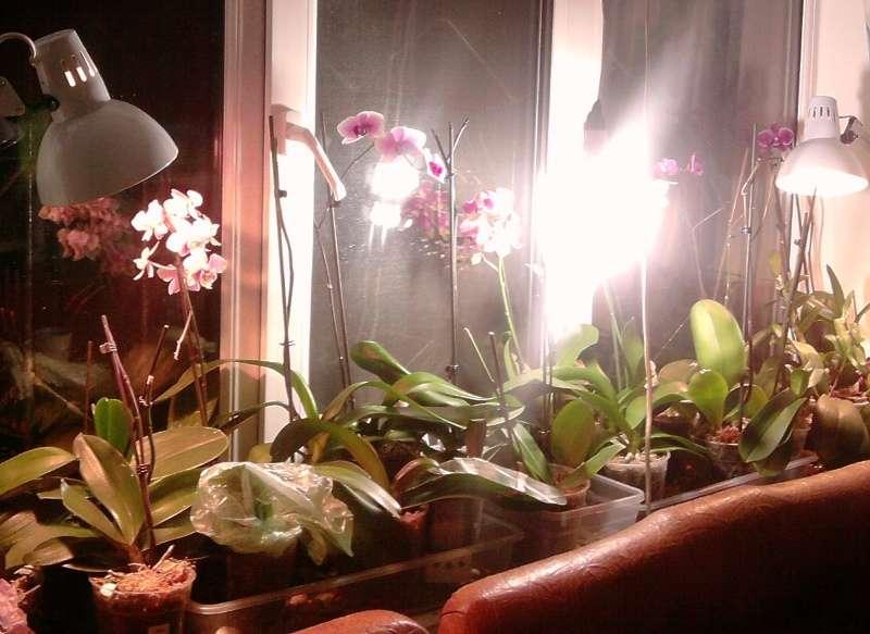 энергосберегающие лампы для фаленопсиса