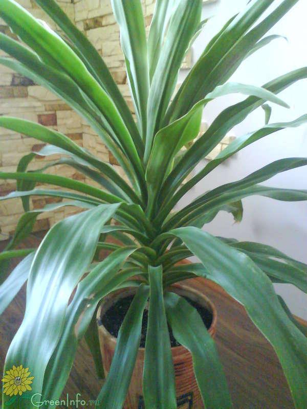 комнатные нецветущие растения фото с названиями ведь
