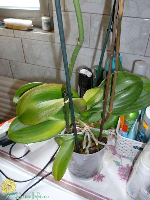 садовых скамеек почему вянет орхидея что делать знаете куда