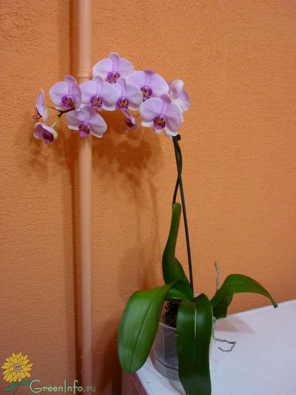 Форум цветов орхидея