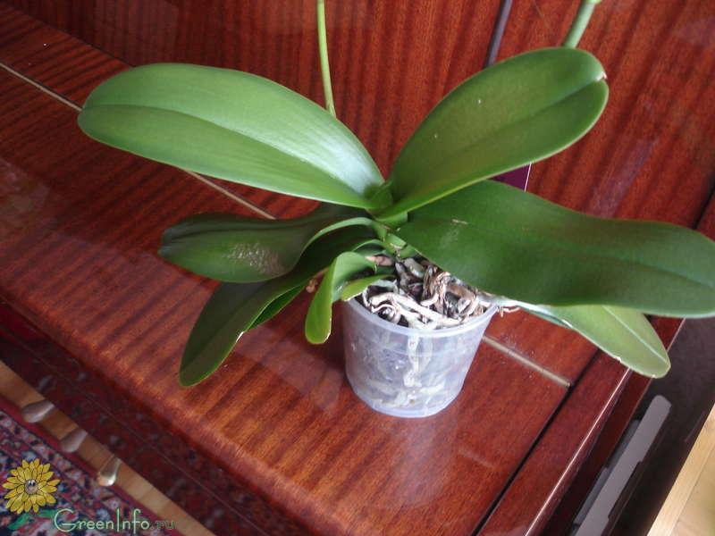 Цветок с листьями орхидеи