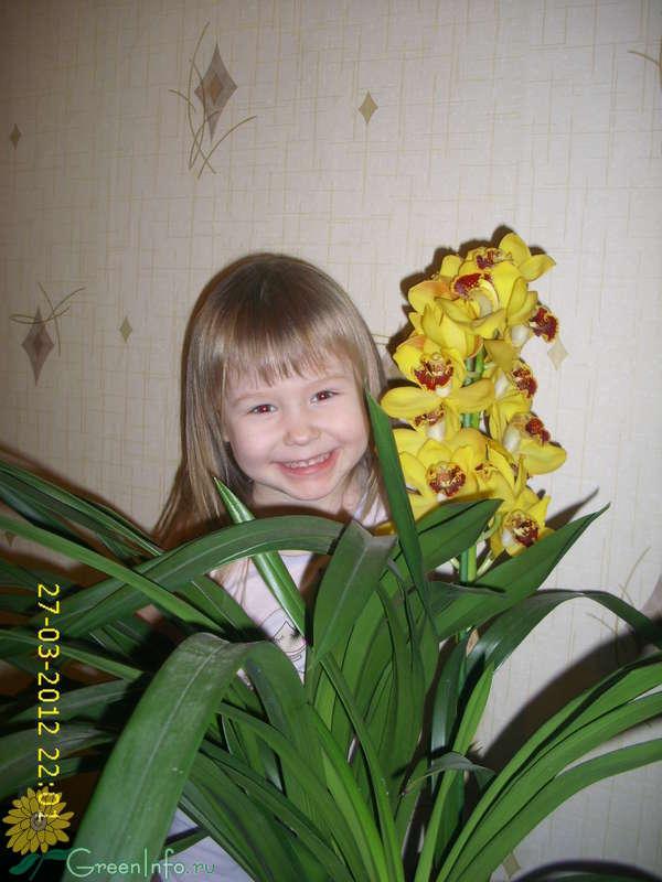 Орхидея цимбидиум уход в домашних условиях фото