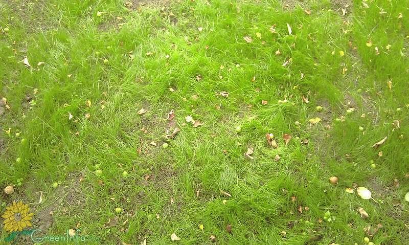 Форум газон всходит неравномерно