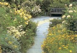 Желтый сад