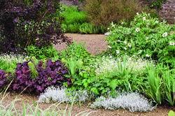 Белые пионы, незабудки и почвопокровная ясколка смотрятся очень романтично, гейхеры придадут пышность композиции, а ирисы - структурность