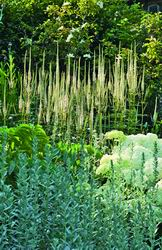 Сочетание вероники виргинской, гортензии древовидной Anabelle и полыни Людовика - садовая классика