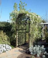 Глициния в белом саду