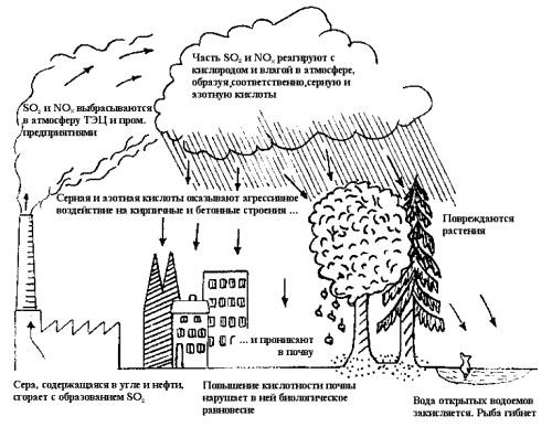 Кислотные дожди доклад по биологии 981