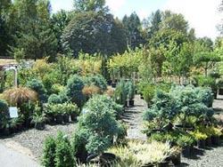 Что такое посадочный материал где его выращивают?