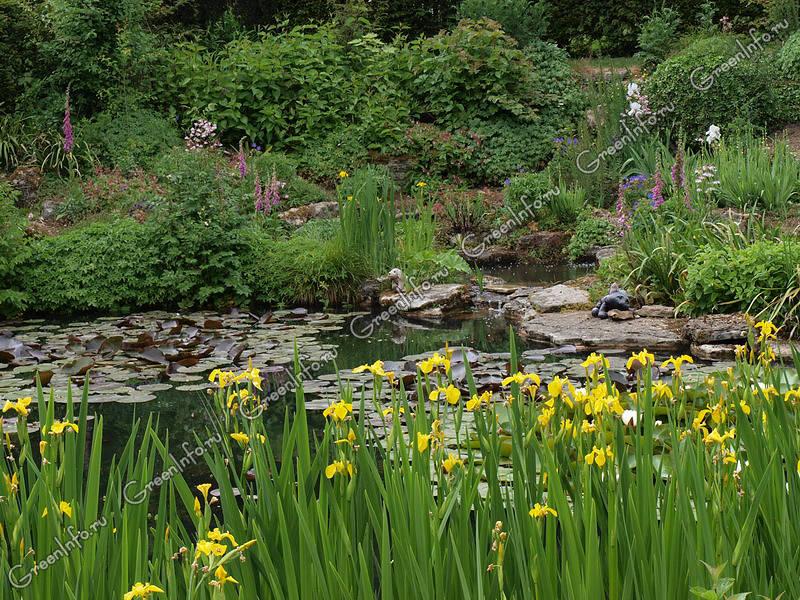 растительный мир рек
