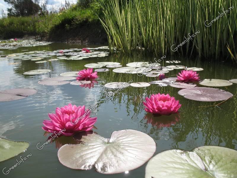богослужениях елеем как сделать прудик для лилии году