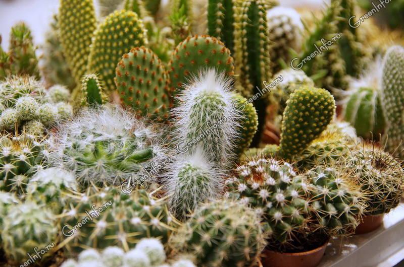 дрожжи для удобрения комнатных растений отзывы