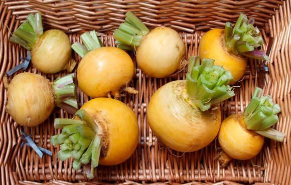 Исконно русский овощ – репа: сорта и свойства