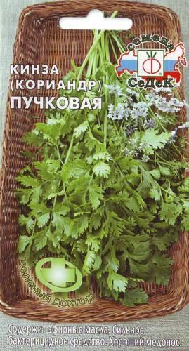 Выращивание кинзы в открытом грунте и на подоконнике из семян на зелень. Популярные сорта кориандра