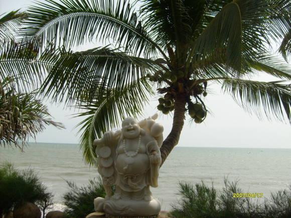 фото кокосовое дерево