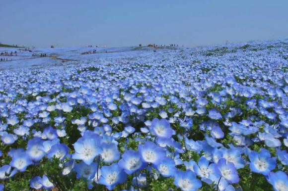 Hitachi Seaside Park (фото с официального сайта)