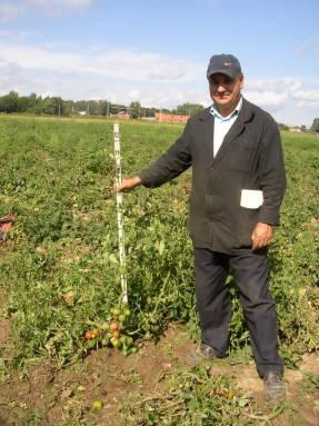 Козак Владимир Иванович на полях томатов