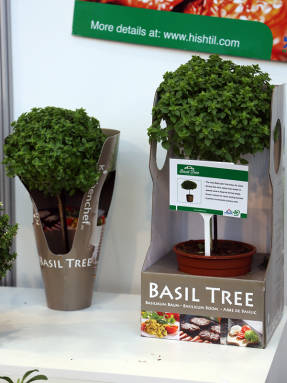 Базиликовое дерево