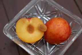 Шарафуга: во вкусе больше от абрикоса