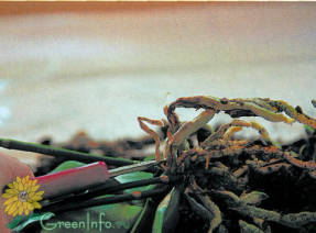 Удаление отмерших корней