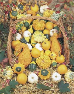Декоративные тыквы, мелкоплодная смесь